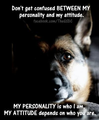 Do not get confused! #german #shepherd #dog