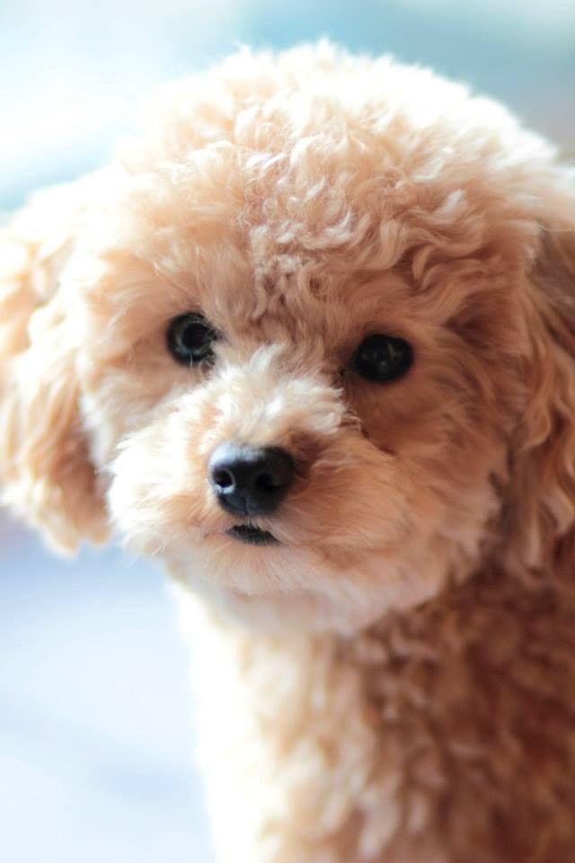 Nous aimons ou pas, personellement j'aime beaucoup ces petits chiens