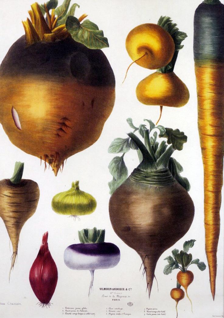 17 Best images about Botanical on Pinterest | Antiques ...
