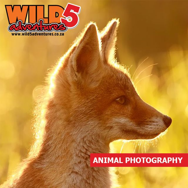 Follow these 10 tips to Perfect animal photography: Work the light #Wild5PawPrint http://bit.ly/1W5EaKQ