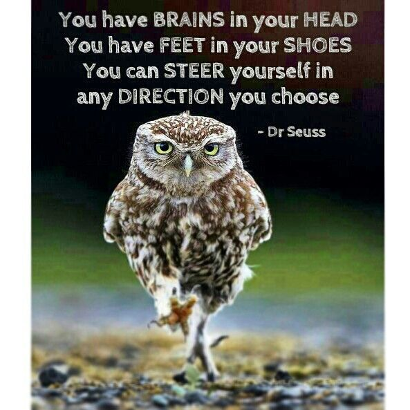 Dr Seuss quote. Owl pic. You have brains in your head. You have feet in your shoes. You can steer yourself in any direction you choose.