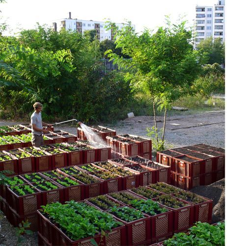 mobile planter boxes!?!?!    Inside Urban Green: The Princess Gardens: A Berlin Community Garden