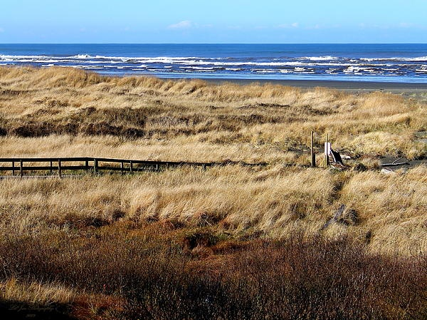 black singles in ocean shores For homes for sale in washington, re/max has an extensive database browse the ocean shores today.