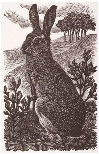 Charles Frederick #Tunnicliffe R.A.: Sitting #Hare, 1949, #Wood-#engraving #modernart #art #modern #wildlife #llfa