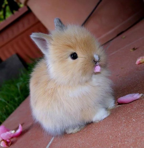 18 awesomely cute bunnies that will cheer up your day