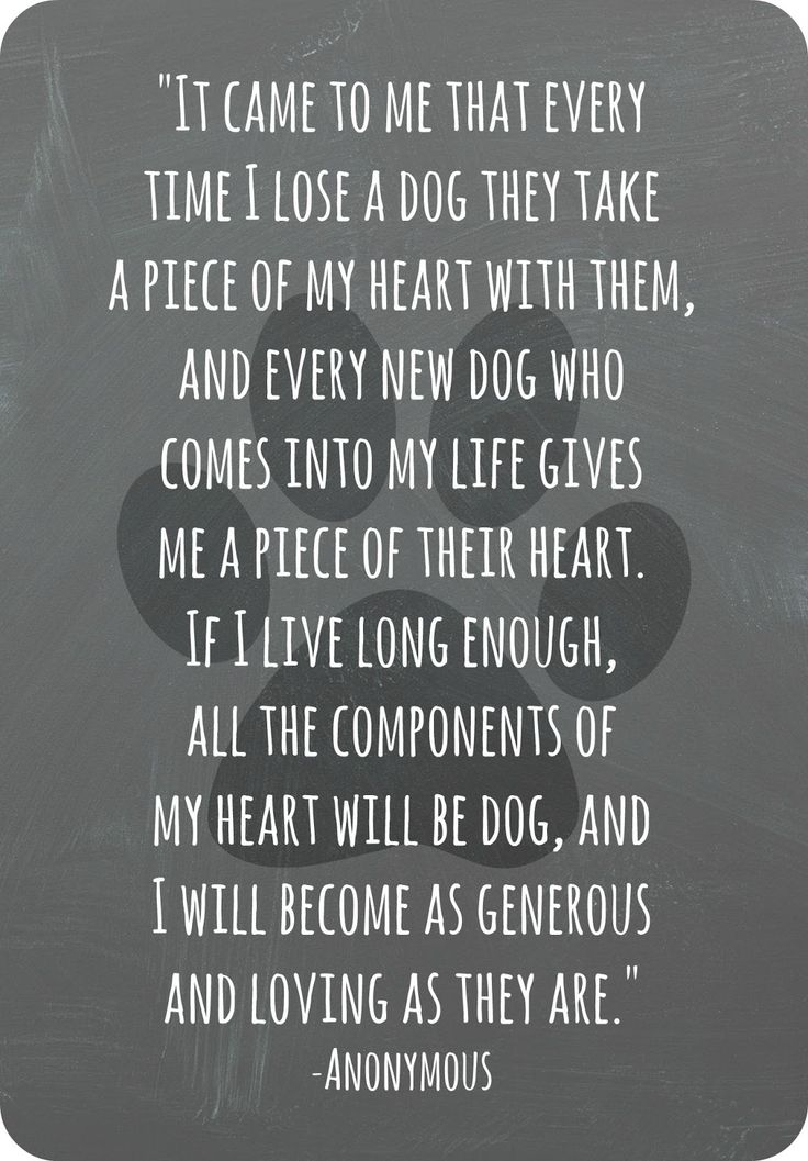 wildly simple Goodbye to a Good Friend Dogs Pinterest