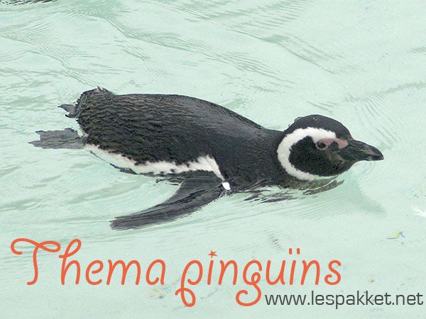 lespakket, thema pinguïns