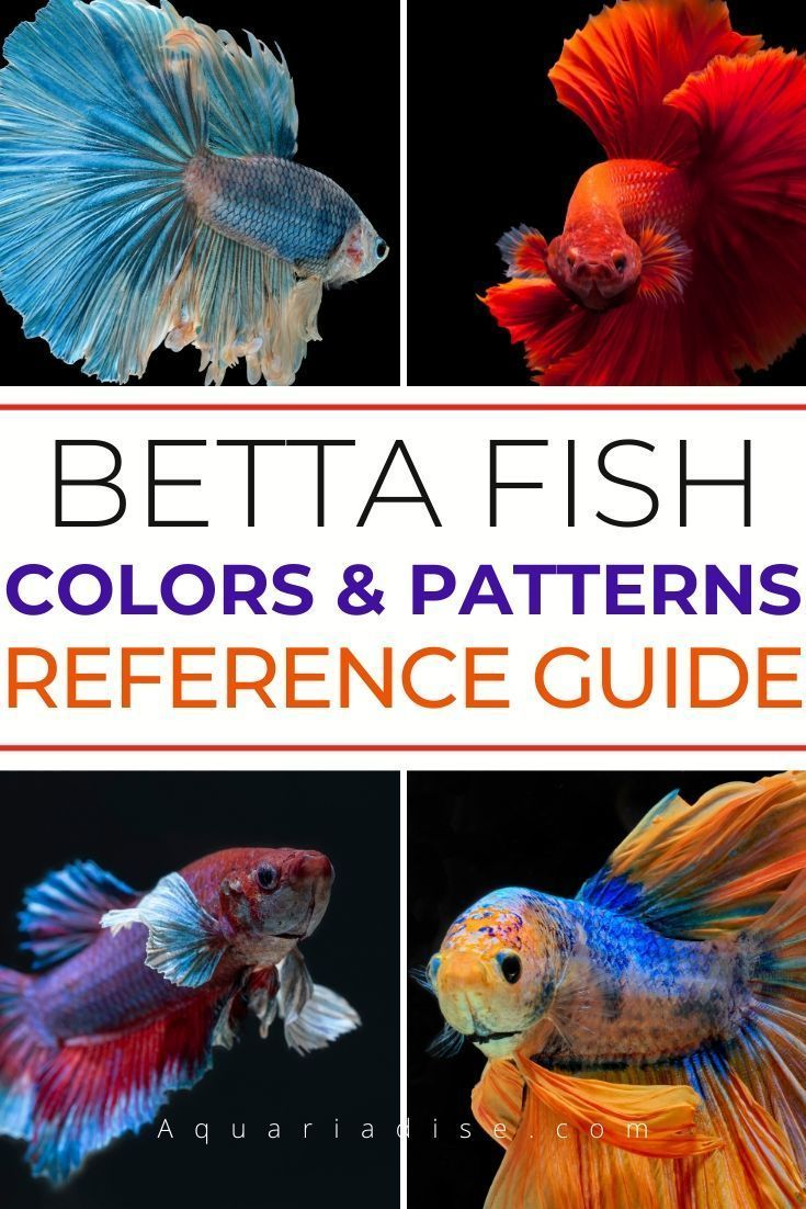 Betta Fish Reference Guide For Colors And Patterns In 2020 Betta Fish Betta Fish Types Betta Fish Care