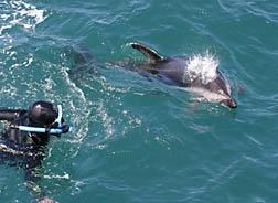 Dolphin Encounter in Kaikoura.