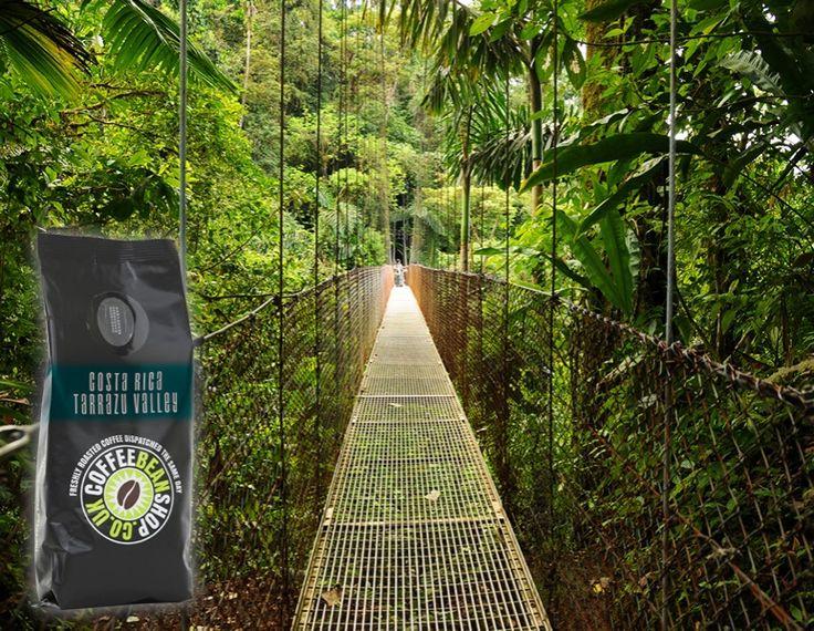 Costa Rica Tarrazu Valley -