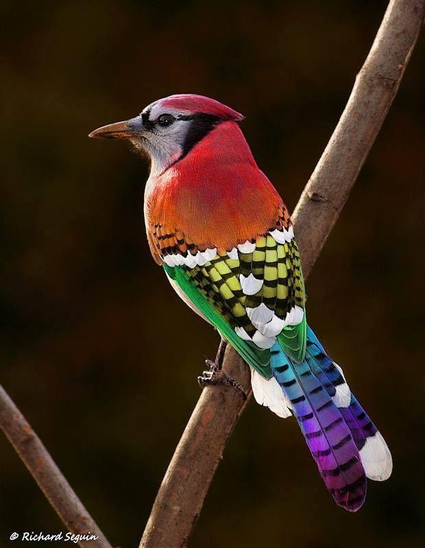 Amazing Colourful Bird