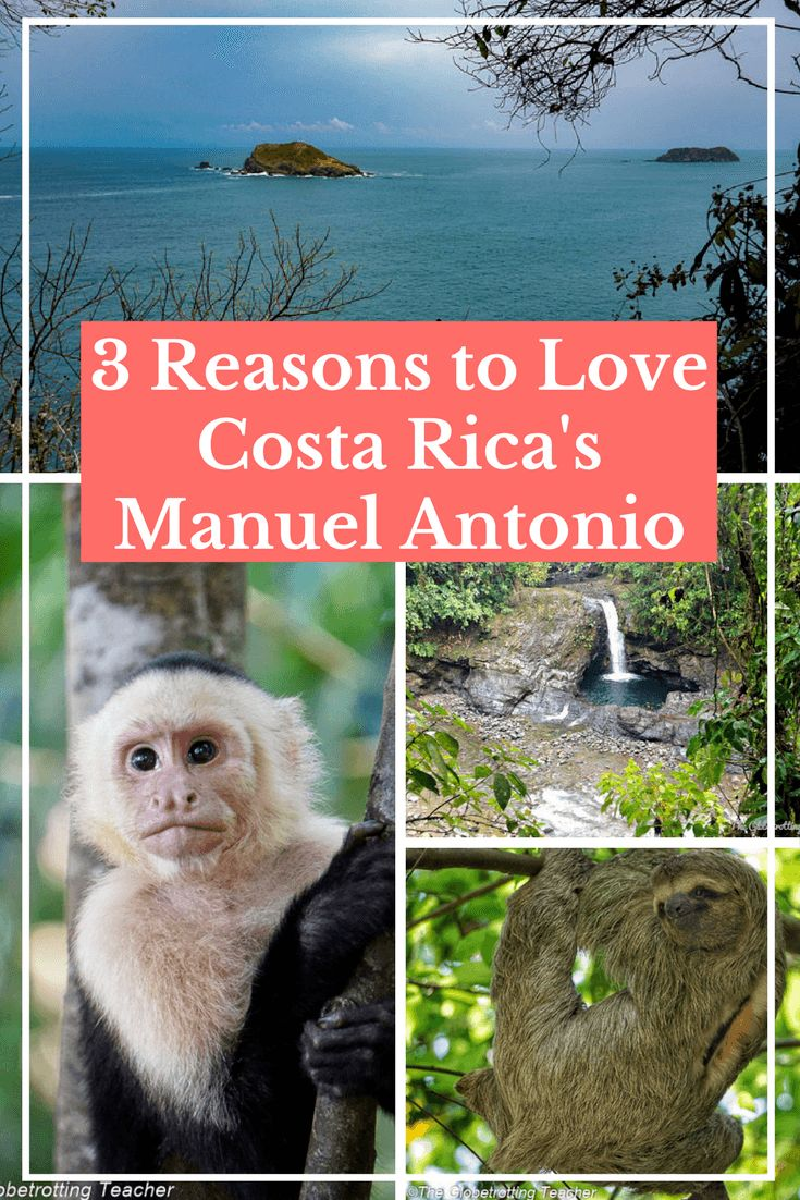 3 Reasons to Love Costa Rica's Manuel Antonio | Travel Costa Rica | Wildlife | Manuel Antonio National Park | Nature