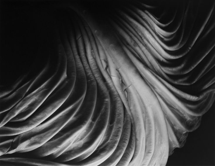 Edward Weston: CABBAGE LEAF, 1931