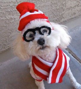 Last Minute DIY Halloween Costumes for Your Dog | Broke-Ass Stuart's Goddamn Website