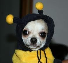 bee dog :-)