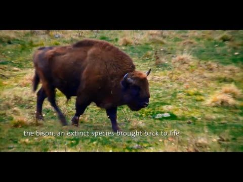 Discovering Romania | Natural Parks & WildLife