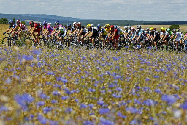 "Field of Flowers: ""The pack of riders cycles during the seventh stage of the 99th Tour de France cycling race between Tomblaine and La Planche des Belles Filles, July 7, 2012. REUTERS/Bogdan Cristel"""