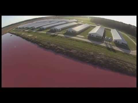 A Drone Flew Over A Pig Farm To Discover It's Not Really A Farm. It's Something Much More Disturbing.