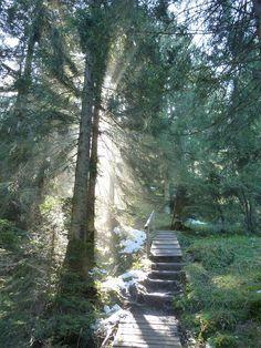 """Unsere Wanderung auf die Alpspitz bei Nesselwang führt über den Wasserfallweg bis zur """"BergLodge"""", auf dem Rückweg nutzen wir die Sommerrodelbahn."""