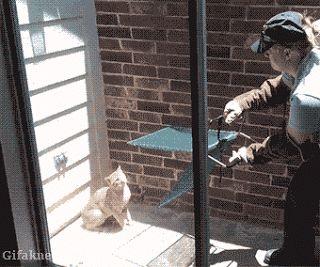 Mucha Furia En Cuerpos Pequeños Animales fer Gatos humor Muerte