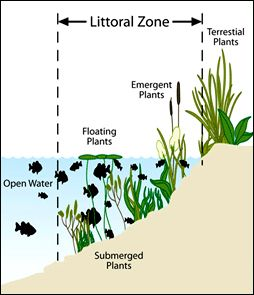Shallow Area Along Shoreline called Littoral Zone