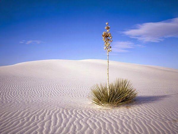 Πλησίστιος...: Οι μύστες της ερήμου