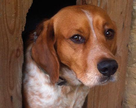 AUTOMÉDICATION POUR SON ANIMAL. Bonne ou mauvaise idée ? Entre le prix de la consultation vétérinaire et celui des médicaments à usage vétérinaire, la tentation est grande de soigner soi-même son animal. Oui, mais avec quoi et dans quelles limites ? | Rebelle-Santé