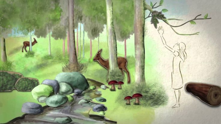 International Day of Forests 2014 - Today is International Forest Day! Let's celebrate Mother Nature by sharing this beautiful video. Tell us what you think about this initiative.  #bloomshowroom #nature #forestday