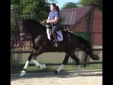 www.sporthorses-online.com 2011 top Dressage prospect for sale