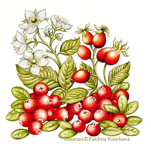 Mixed herbs (rose hip, cranberry and blackberry)