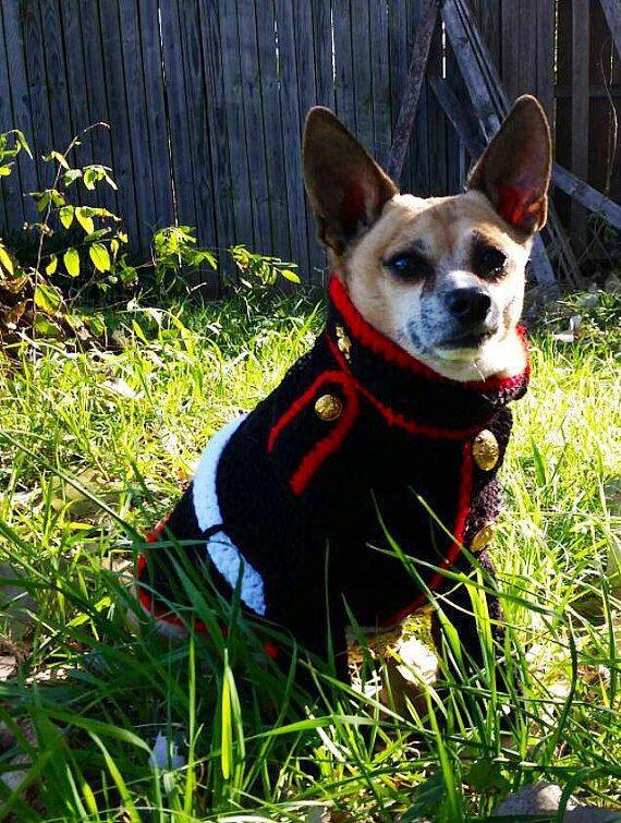 Dotson Dogs Make The Perfect Pet