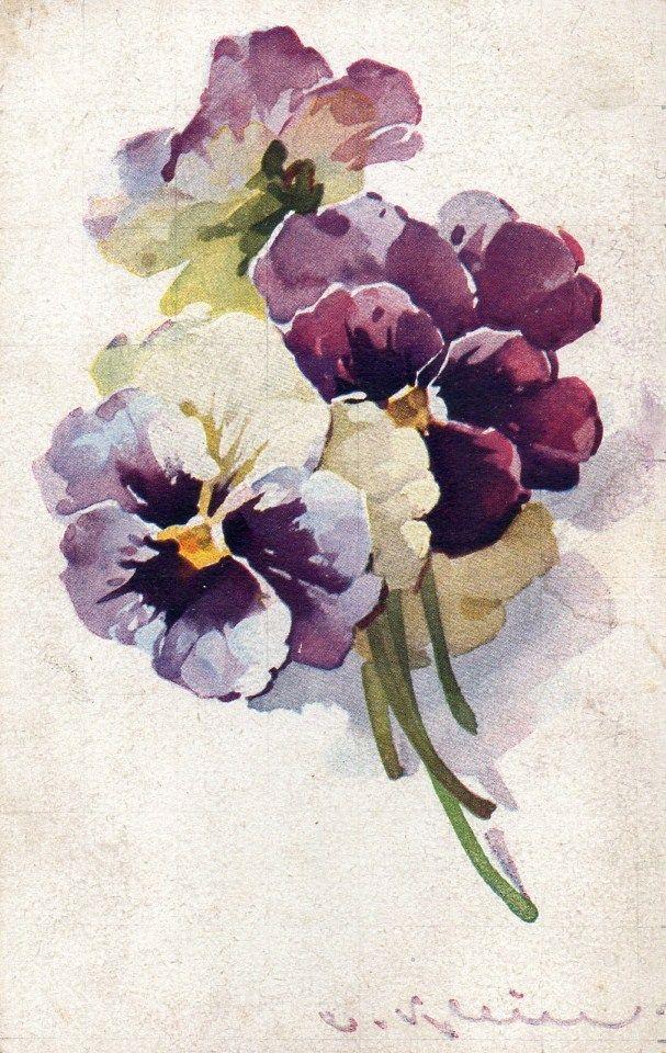 Catherine Klein pansies.