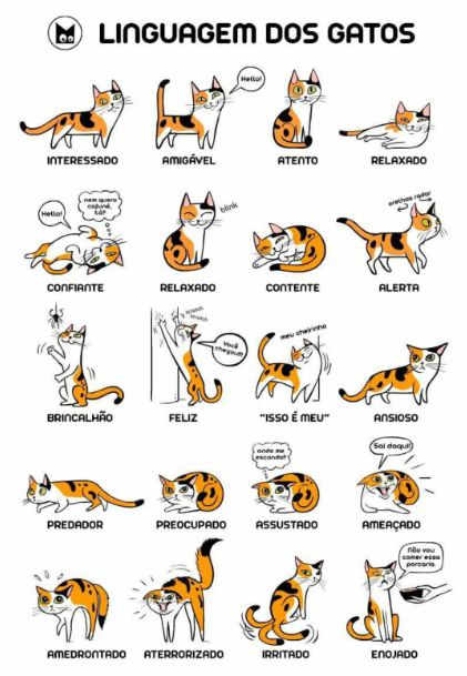 Linguagem dos gatos.                                                                                                                                                                                 Mais