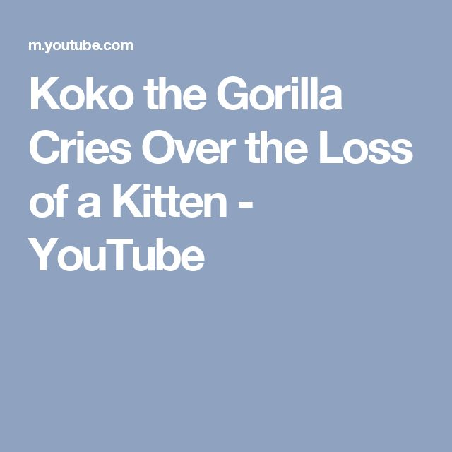 Koko the Gorilla Cries Over the Loss of a Kitten - YouTube