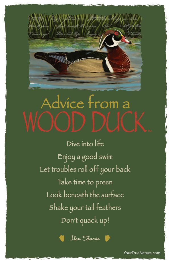 Advice from a Wood Duck