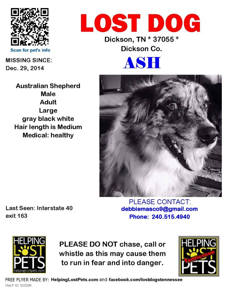 Best Lost Dogs Ar Images On   Lost Arkansas And Find