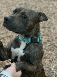 Dogs For Adoption Petfinder Dog Adoption Dogs Up For Adoption Dog Pounds