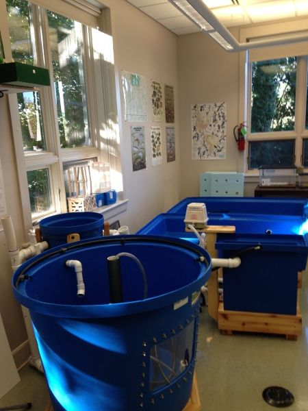 762 Best Preppers Aquaponics Hydroponics Systems