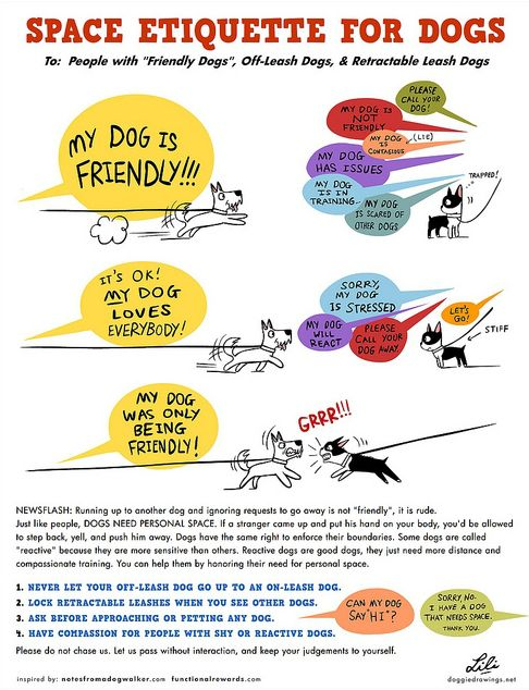 "Space Etiquette For Dogs ~ Some people do not understand dog posturing nor do they restrain their furkids in certain situations. An off-leash dog ""greeting"" an on-leash dog can pose problems. Be responsible for your actions."