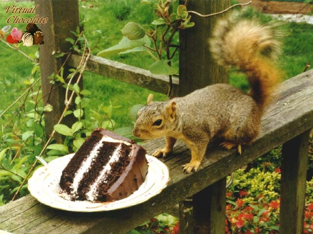 Can Squirrels Eat Chocolate Cake