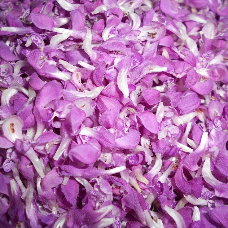 Purple dead nettle :) #herbs #herbal #ziola #food #jedzenie #spices