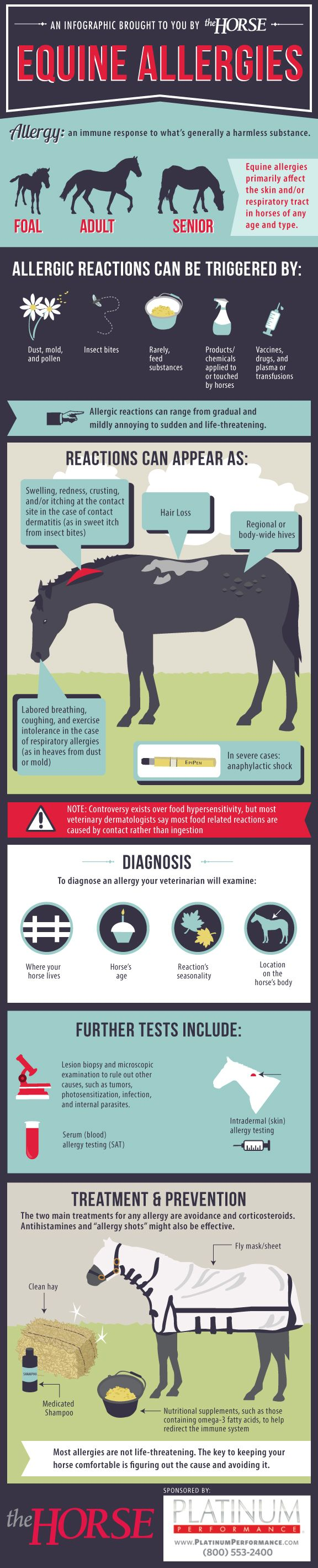 [INFOGRAPHIC] Equine Allergies - Learn more about allergic reactions in horses with this step-by-step visual guide, brought to you by TheHorse.com and @Platinum Performance  #horses #horsehealth #allergies