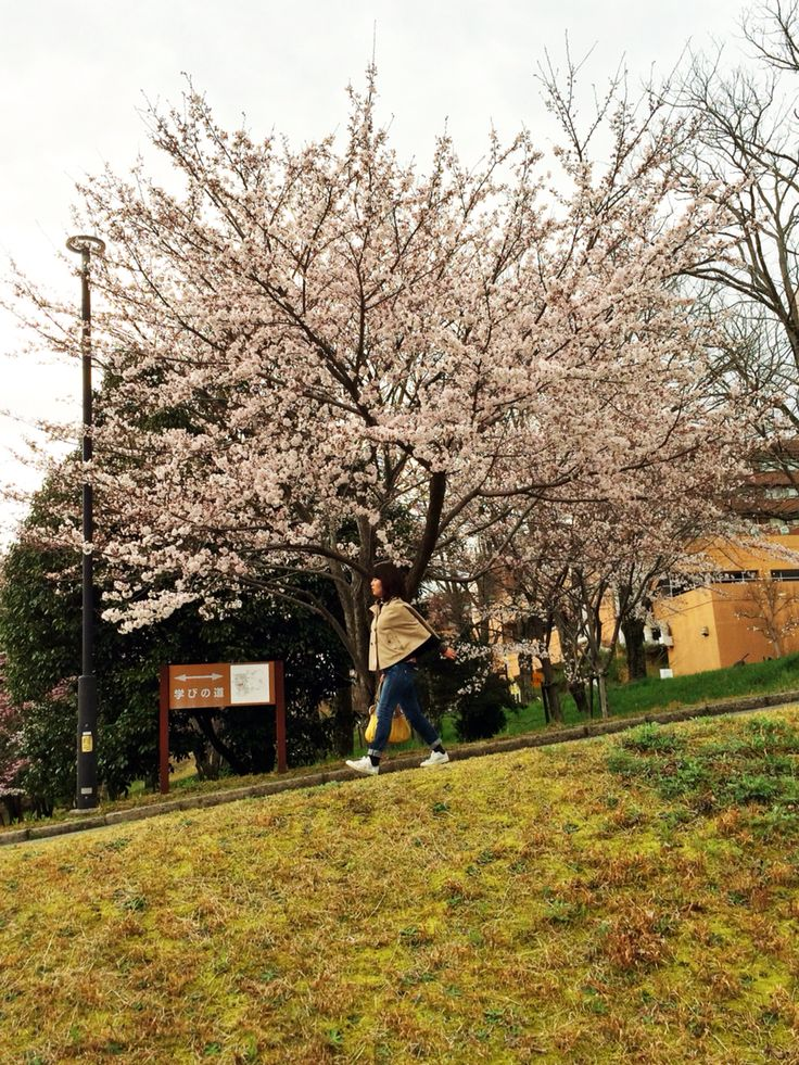 Passing by the sakura to go downhill