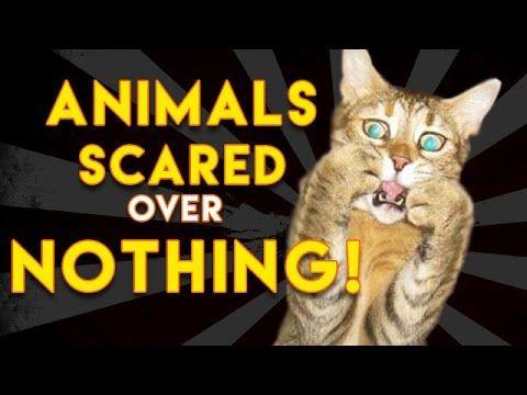 24 Funny Animals with Captions LOL! | TROLLOX