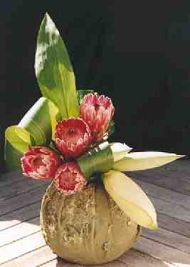with hosta leaves in a coconut. Protea of South Africa and Australia , plant information for growing and its use in flower arranging, with the Floral Art Mall