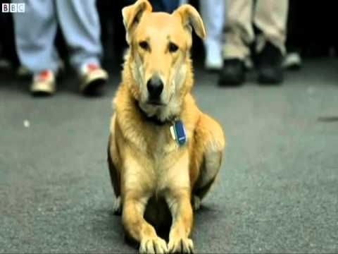 Greece's riot dog Loukanikos dies Loukanikos, the valiant dog who faced down Greek riot police during the height of the eurozone crisis, has died