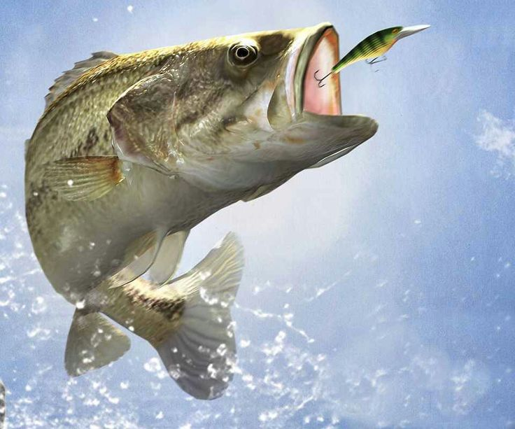 1000 images about bass fishing on pinterest mouths