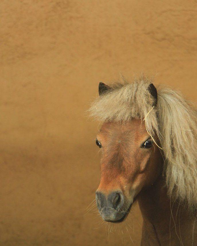 """72 Beğenme, 5 Yorum - Instagram'da 🇹🇷 (@hayatvereniinkulu): """"#horses #horse #horsesofinstagram #horseshow #horseshoe #horses_of_instagram #horsestagram…"""""""