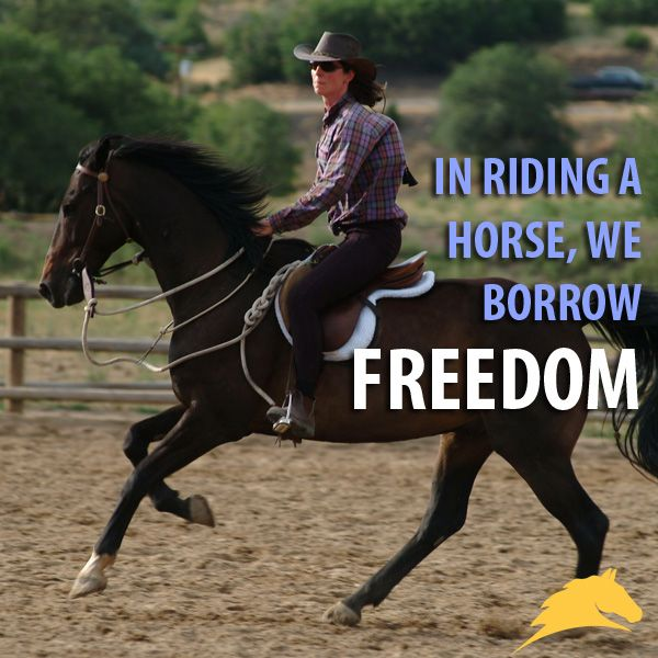 115 Best Horse Quotes Images On Pinterest Equestrian
