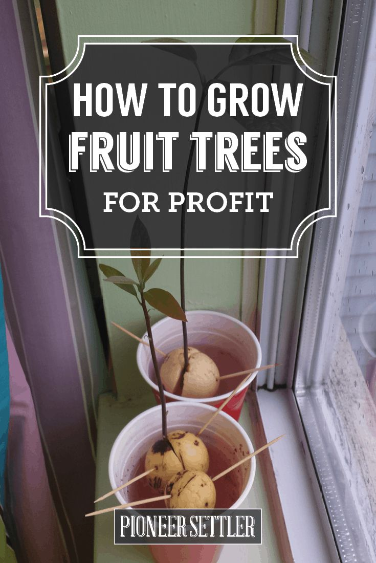 Check out Growing Trees For Profit In Your Backyard at https://homesteading.com/growing-trees-profit-backyard/